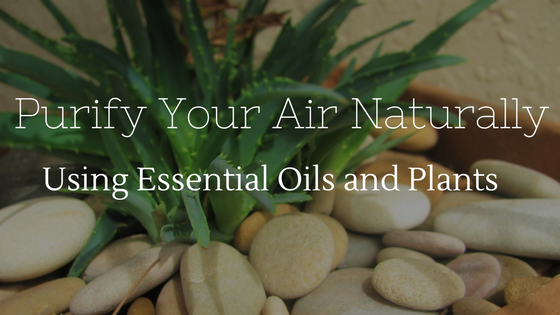 Purify Your Air Naturally Using Essential Oils And Plants