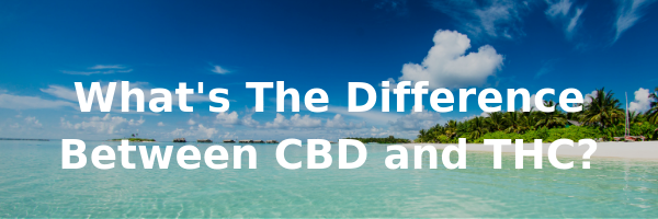 Whats the difference between CBD and THC